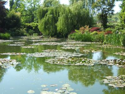 nympheas pond in spring time, monet garden giverny