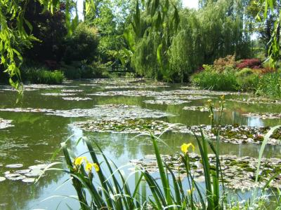 the waterlilly pond in monet's garden