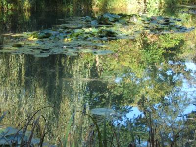 Etang aux Nympheas de Monet Octobre