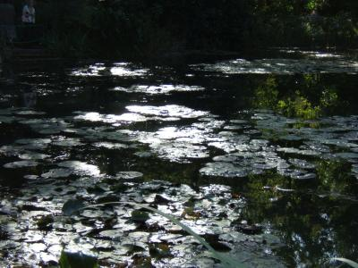 Claude Monet's Nympheas Pond